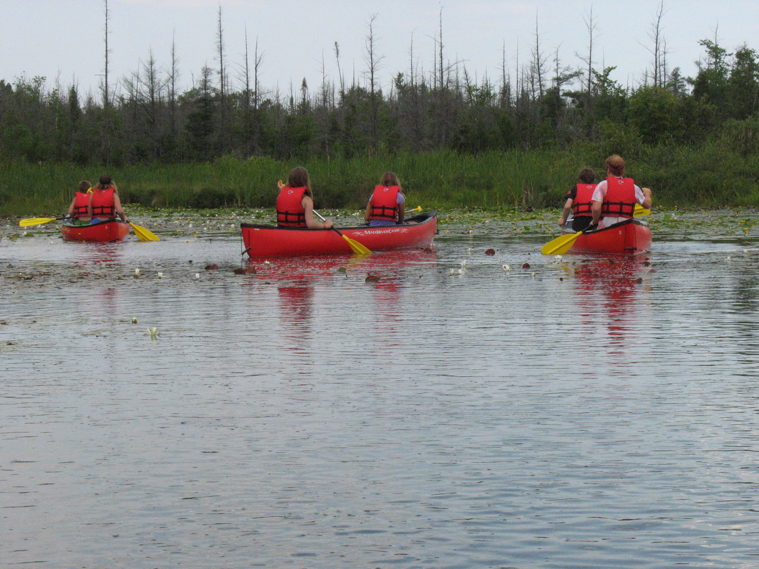 A group of canoers paddle through a marshland.
